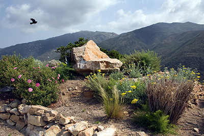 busch-design-native-landscape-design