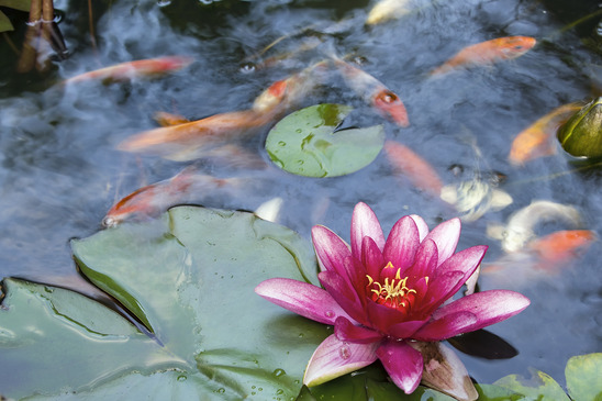 koi pond installation in Malibu