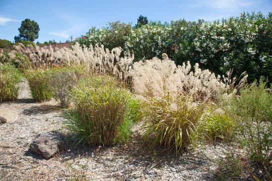 LA drought tolerant landscape